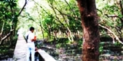 ศูนย์อนุรักษ์และศึกษาระบบนิเวศป่าชายเลน โรงเรียนบางตะบูนวิทยา