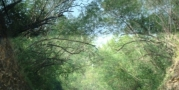 อุโมงค์ต้นไม้