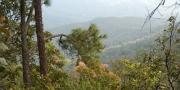 วนอุทยานป่าสนหนองคู