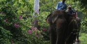 หมู่บ้านช้างพัทยา