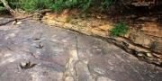 วนอุทยานภูแฝก ( แหล่งรอยเท้าไดโนเสาร์ )