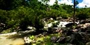 สวนป่าสมเด็จพระนางเจ้าสิริกิติ์