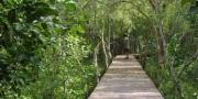 พื้นที่ศึกษาธรรมชาติป่าชายเลนอ่าวมหาชัย