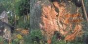 โนนวัดป่า