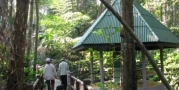 ป่าจำปีสิรินธร
